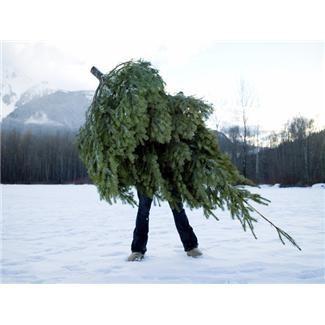 Tree Pick Up.jpg